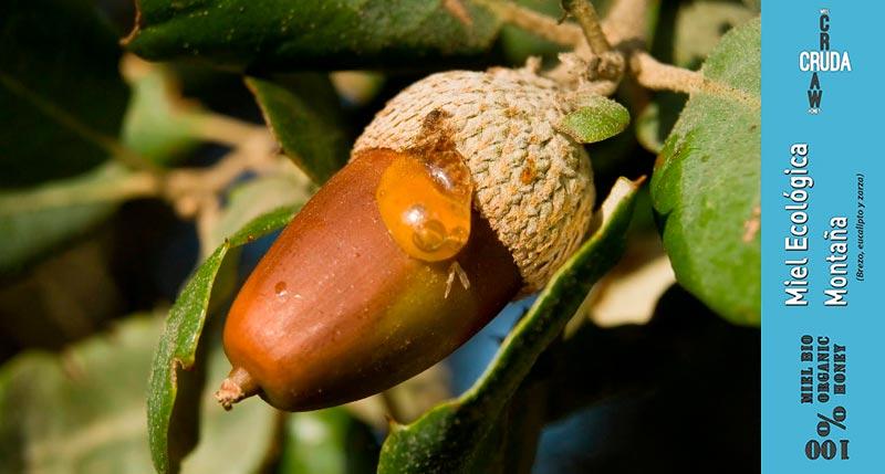 miel cruda ecologica de montaña