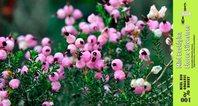 miel cruda ecologica de flores silvestres verdemiel