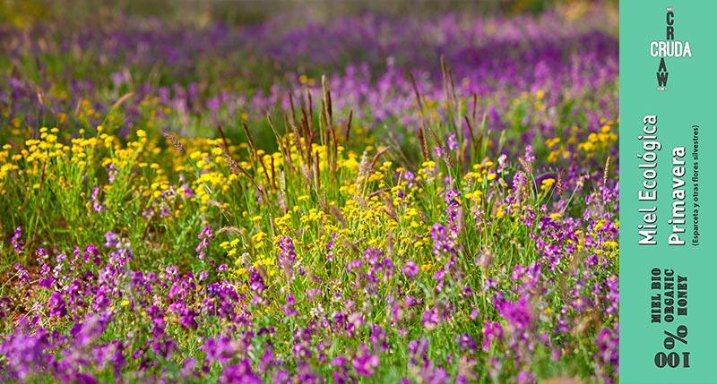 miel cruda ecologica de primavera verdemiel