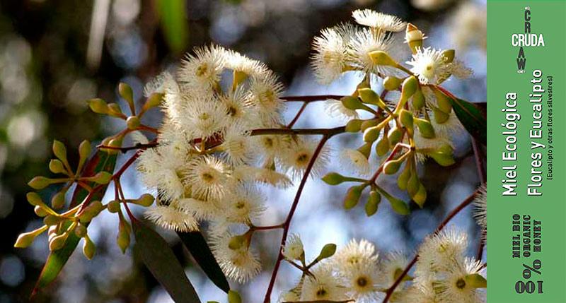 miel de eucalipto cruda