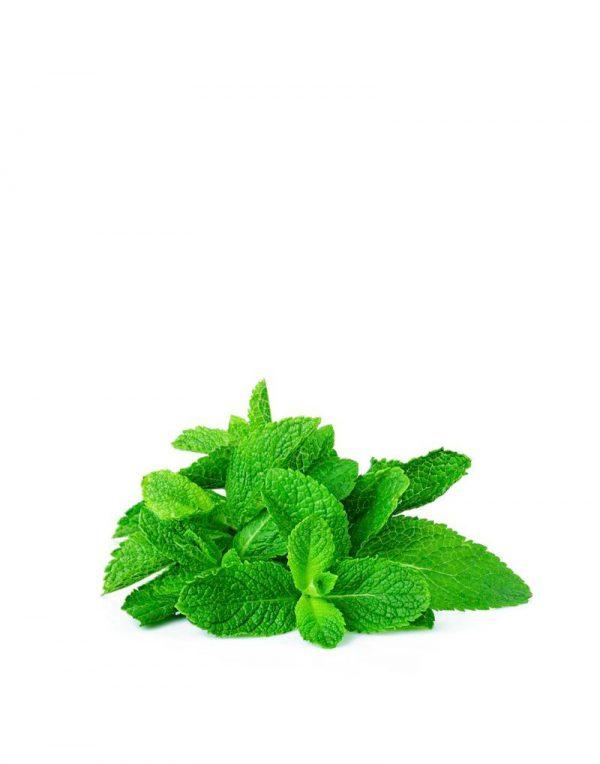 aceite esencial menta piperita ecologico