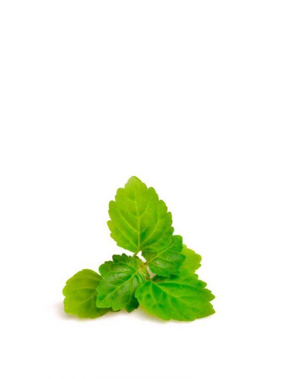 aceite esencial patchouli ecologico