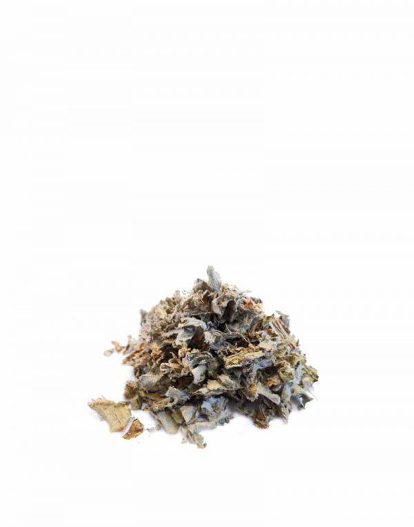alcachofera planta infusion comprar